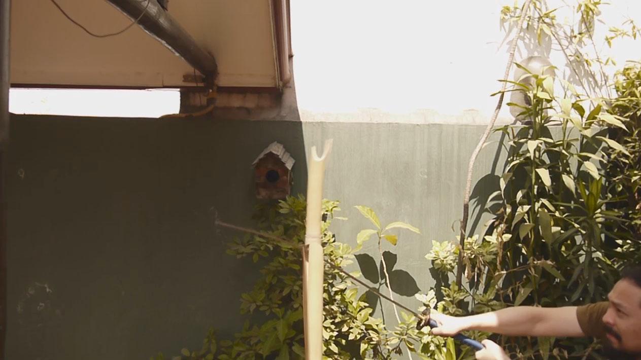 dry bamboo 2